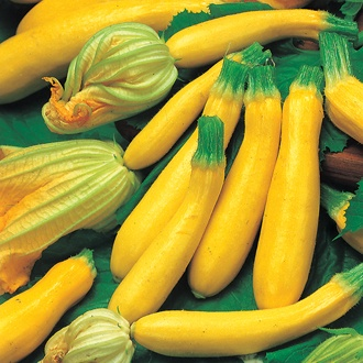 Courgette Goldena Vegetable Seeds