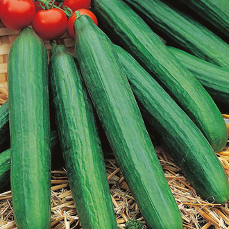 Cucumber Louisa F1 Seeds
