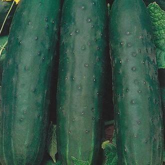 Cucumber Esmarald Seeds