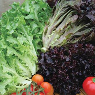 Lettuce Multired 5 & Multigreen 3 Mixed