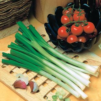 Onion (Spring) Katana F1 Seeds