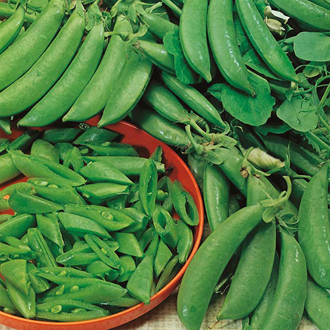 Pea Jessy Seeds