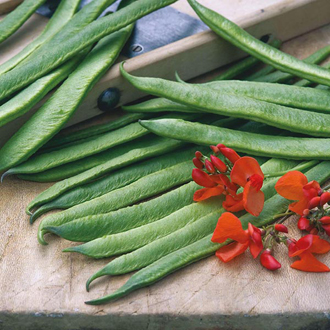 Runner Bean Aintree Seeds