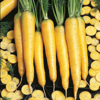 Carrot Yellowstone F1 Seeds