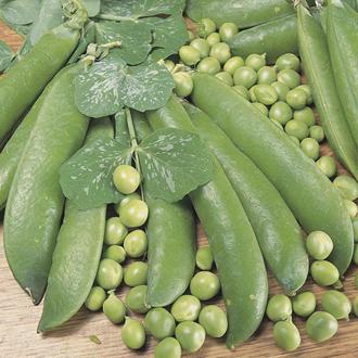 Pea Alderman Seeds