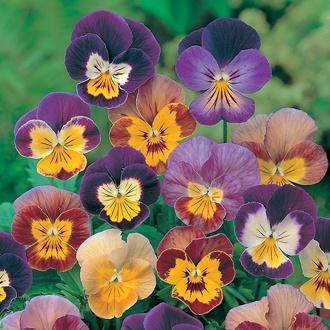 Viola Bambini Mixed