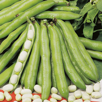 David Domoney, Get Growing Broad Bean