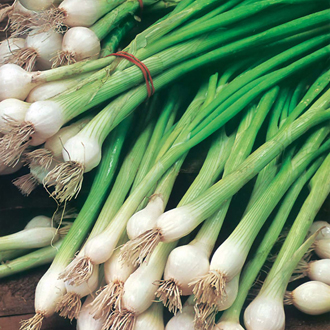 David Domoney, Get Growing Spring Onion