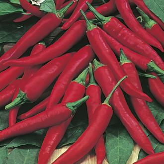 David Domoney, Get Growing Pepper Hot Red