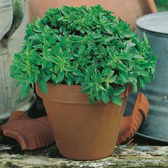 David Domoney, Get Growing Herbs