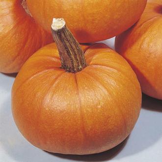 Get Growing Pumpkin - Small Sugar