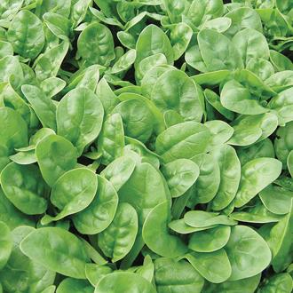 David Domoney, Get Growing Spinach