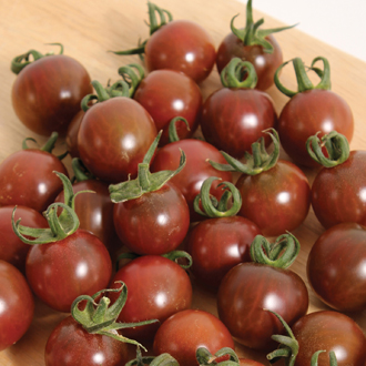 Tomato (Cherry) Black Opal Seeds