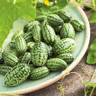Cucamelon Mexican Gherkin Seeds