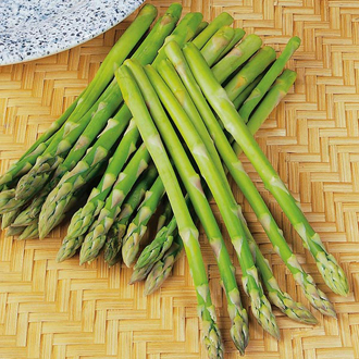 Asparagus Ariane F1 Seeds