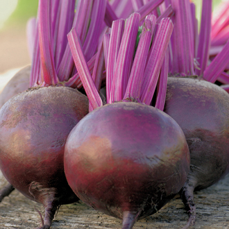 Beetroot Bettolo F1 Seeds