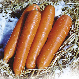 Get Growing Carrot Large Seeds