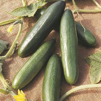 David Domoney, Get Growing Cucumber