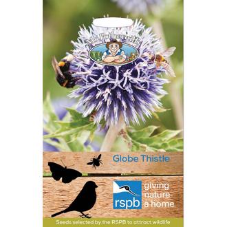 RSPB Globe Thistle Seeds