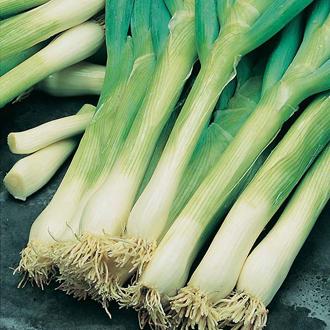 Onion (Spring) Feast F1 Seeds