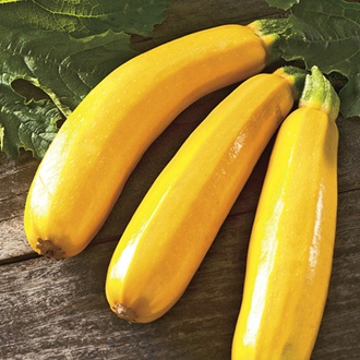 Courgette Golden Dawn III F1 Vegetable Seeds