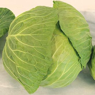 Cabbage Cabbice F1