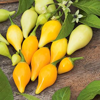 Pepper Biquino Yellow (Sweetydrop) Seeds