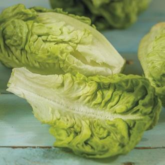 Lettuce Thimble