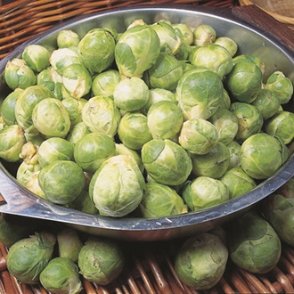 RHS Brussels Sprout Cascade F1 Seed