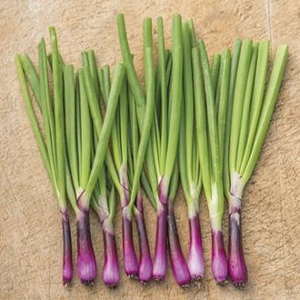 RHS Onion (Spring) Lilia