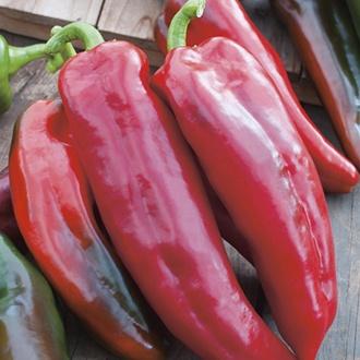 RHS Pepper (Sweet) Corno di torro rosso