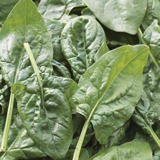 RHS Spinach Missouri F1