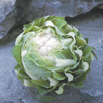 Optigrow Cauliflower Triomphant F1