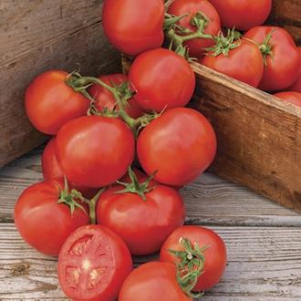 Tomato Oh Happy Day F1