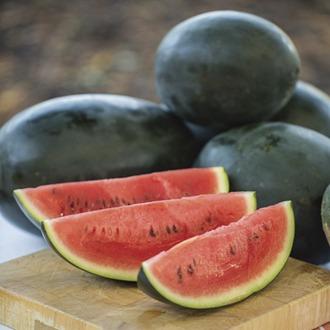 Watermelon Little Darling F1