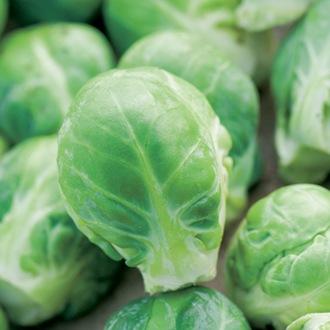 Brussels Sprout Brenden F1 Vegetable Seeds