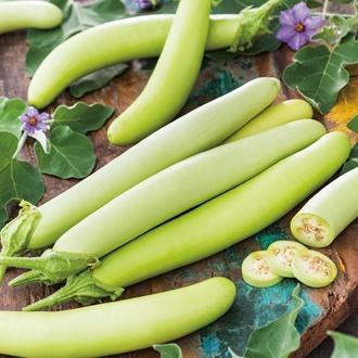 Aubergine Green Knight F1 Vegetable Seeds