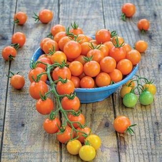 Tomato (Cherry) Honeycomb F1 Vegetable Seeds