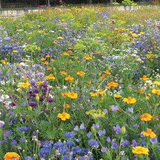 RHS Flowers For Insects