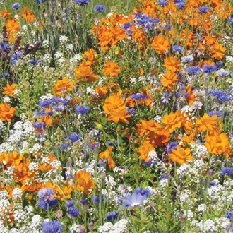 RHS Flowers for Bees Mix