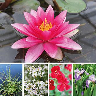 Aquatic Plant Mixed Collection