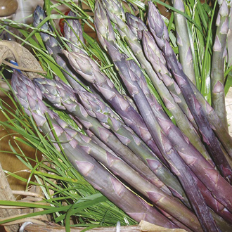 Asparagus Pacific Purple Crowns