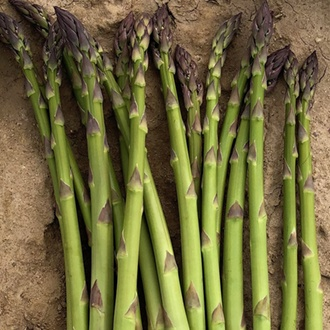 Asparagus Greenic Crowns