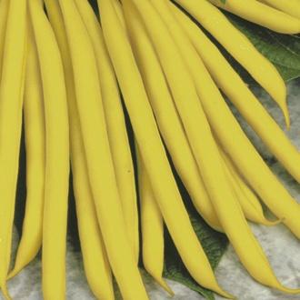 Dwarf French Bean Sonesta AGM Plants