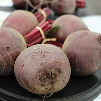 Beetroot Pablo Veg Plants