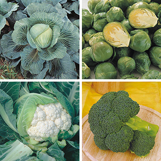 Brassica Collection