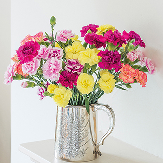 Spray Carnation Plant Collection