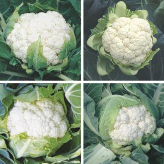 Cauliflower Plant Collection