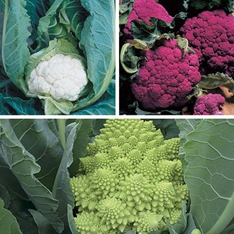 Cauliflower Plant Veg Collection