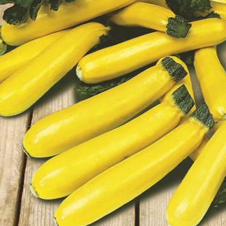 Courgette Soleil F1 Plants
